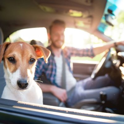 Driving with your dog: Important rules to keep in mind